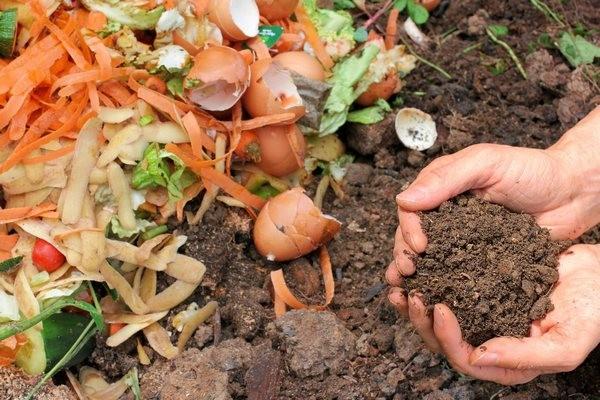 Органические удобрения: виды, значение и применение