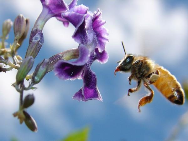 Пчеловодство для начинающих: инструктаж перед началом деятельности
