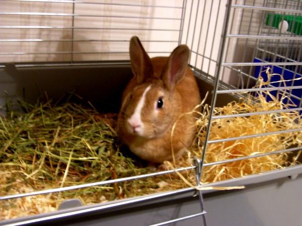 Особенности клеток для кроликов