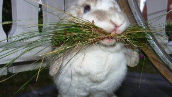 кормушки для кроликов