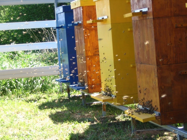 Ульи для пчел: устройство и самостоятельное изготовление