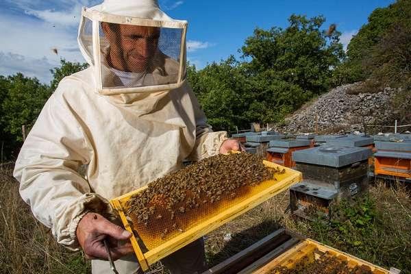 Заготовка меда пчелами: от сбора до запечатывания в соты