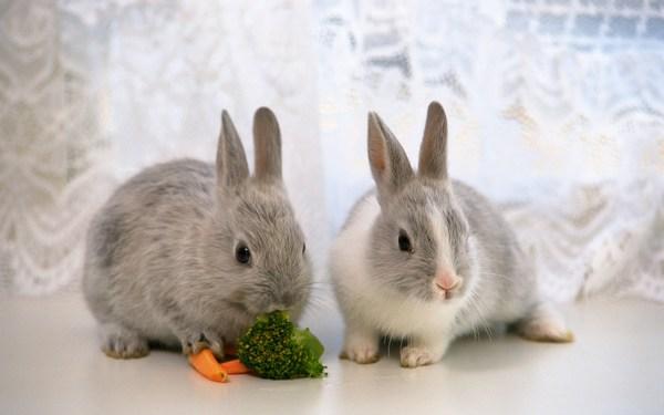 Сколько живут декоративные кролики и как за ними ухаживать
