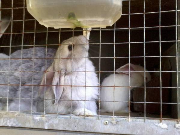Поилки для кроликов своими руками
