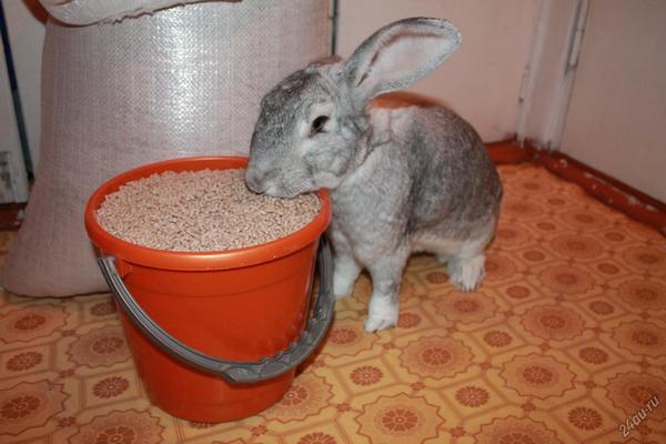 Комбикорм для кроликов: состав, рецепты, дозировка
