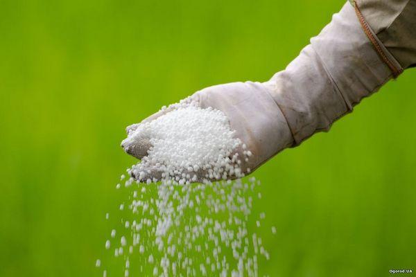 Удобрение мочевина: цели применения, советы по использованию