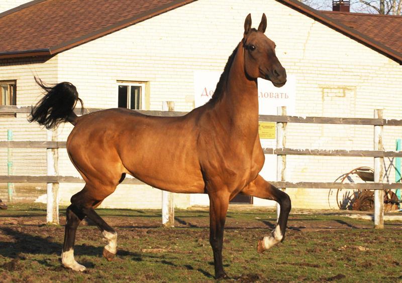 Основные масти лошадей