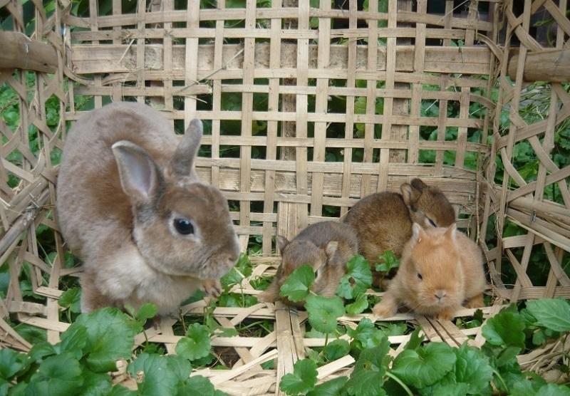 Особенности ухода и содержания карликовых кроликов