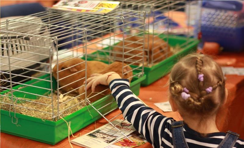 Карликовый кролик содержание уход в домашних условиях 442