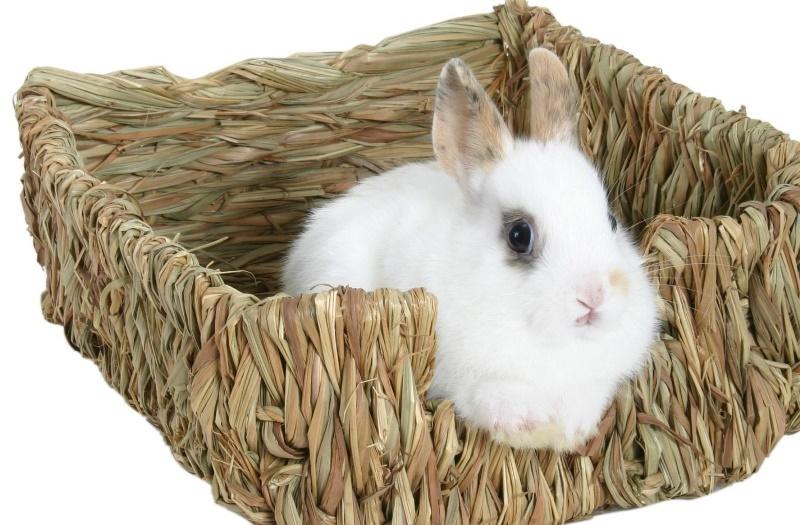 Содержание карликовых кроликов и уход за ними