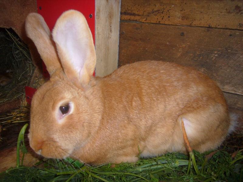 Распространенные болезни кроликов