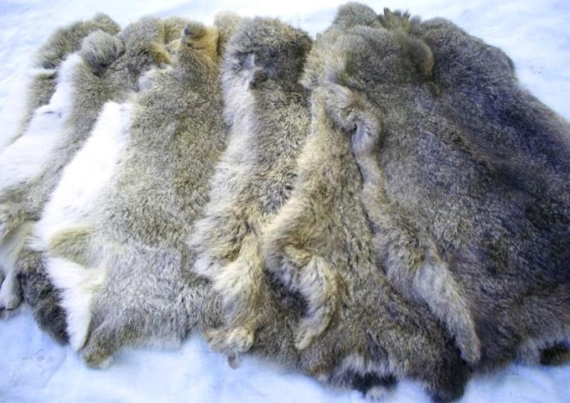Выделка шкурки кролика в домашних условиях