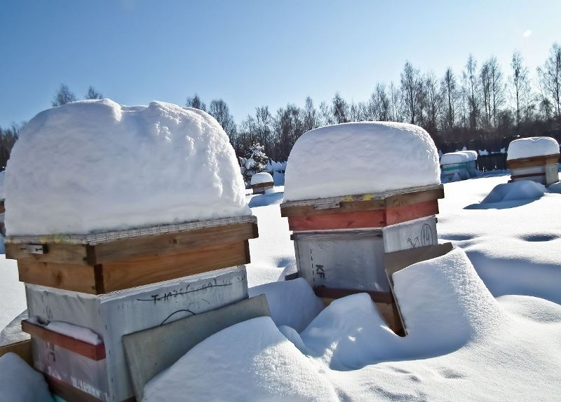 Как осуществляется зимовка пчел?