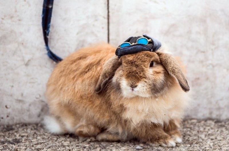Почему у кроликов моча становится красной