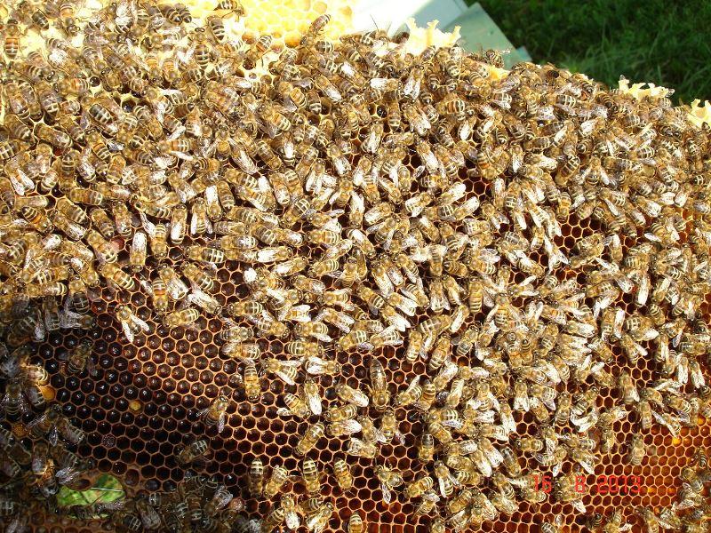 Метод пчеловождения Цебро