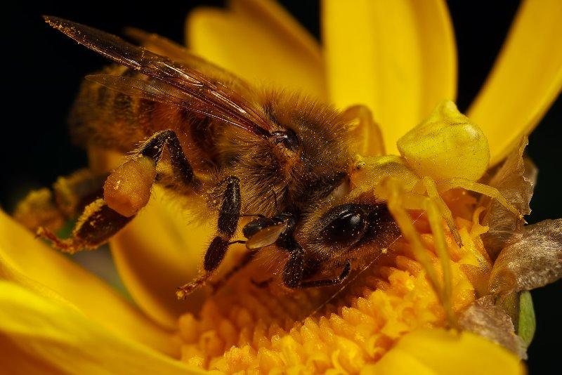 Период жизни пчелы
