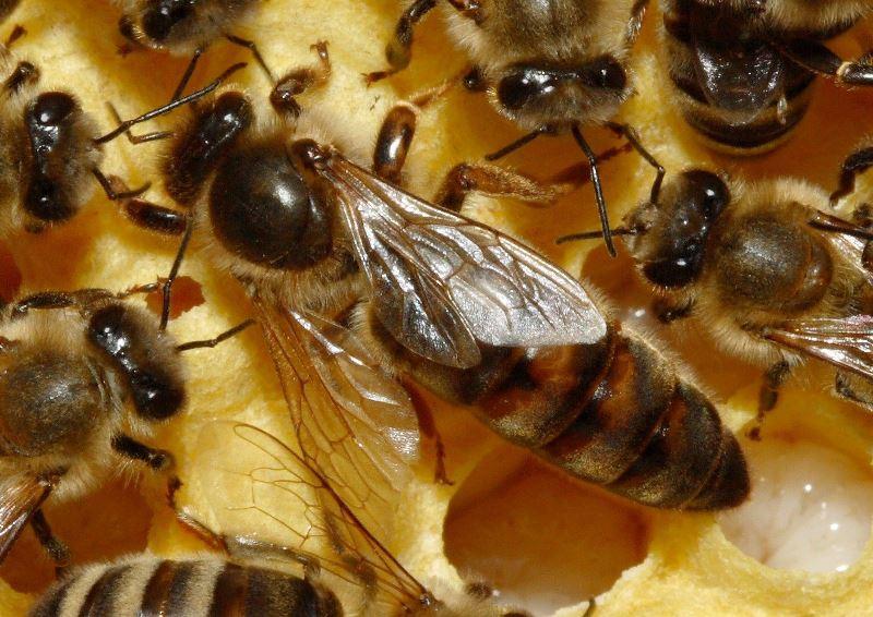 Размножение и развитие пчел видео, попа анус киски частное фото