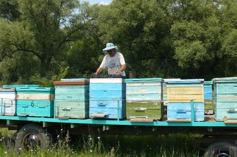 Как развивается пчеловодство в Башкирии?