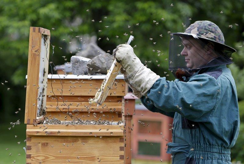 Особенности пчеловодства на Кубани