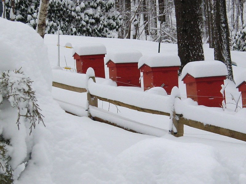 Что пчелы делают зимой