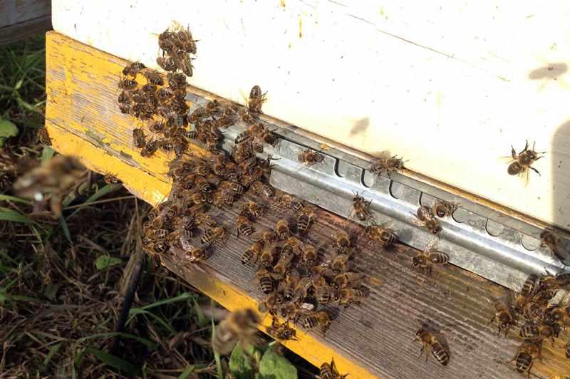 Как развивается пчеловодство в Башкирии