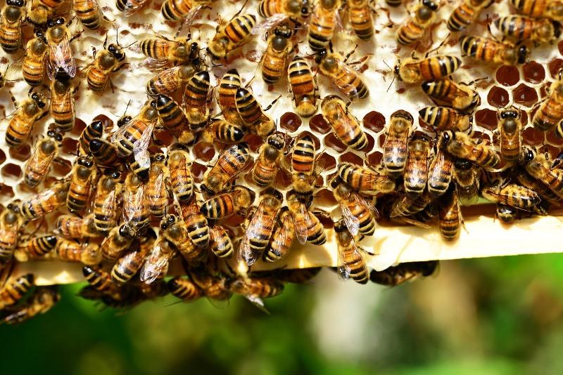 Как предотвратить роение пчел