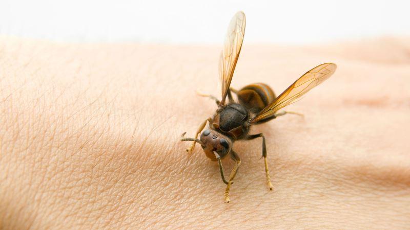 Как проводится лечение пчелами