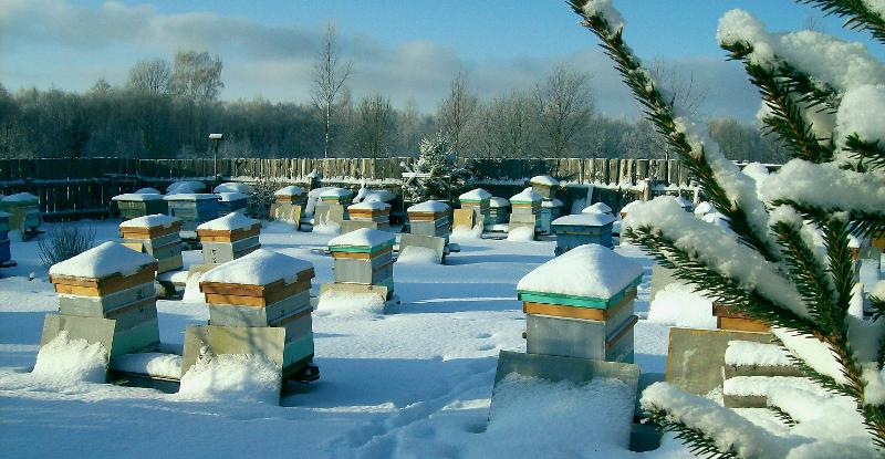 Что делают пчелы зимой