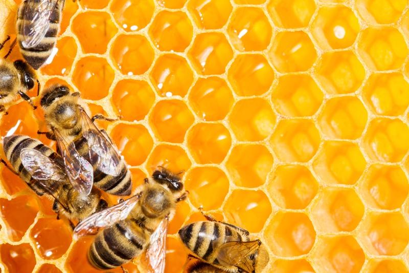 Что нового в современном пчеловодстве?