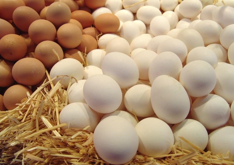 Строение и польза куриного яйца