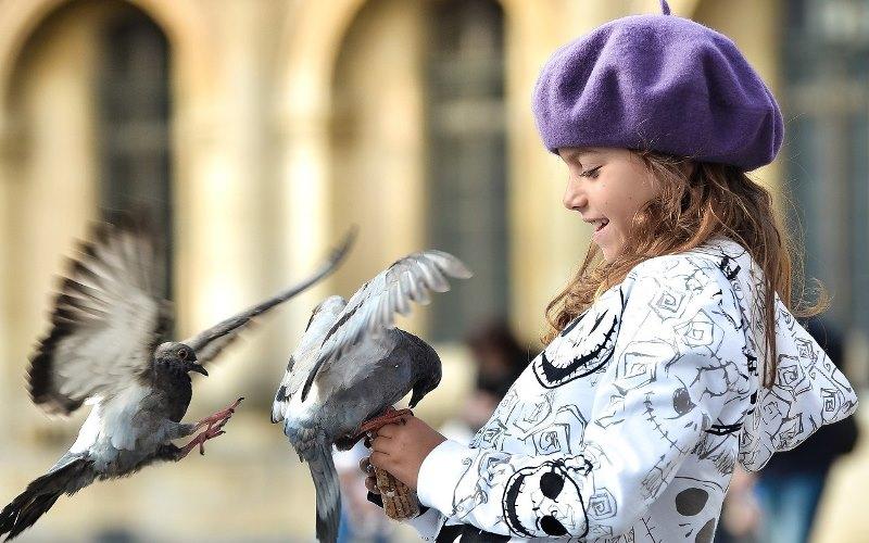Что едят голуби: кормление птиц на улице и дома