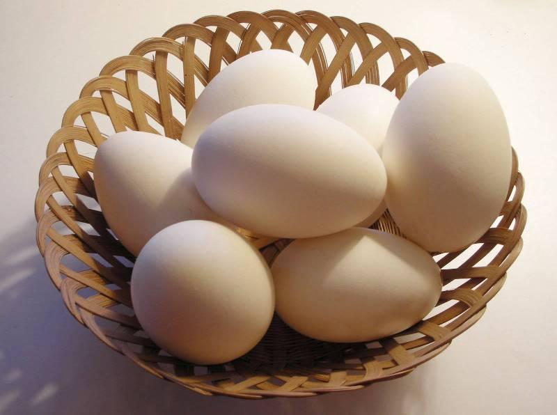 Домашняя ферма: начало яйцекладки у гусей