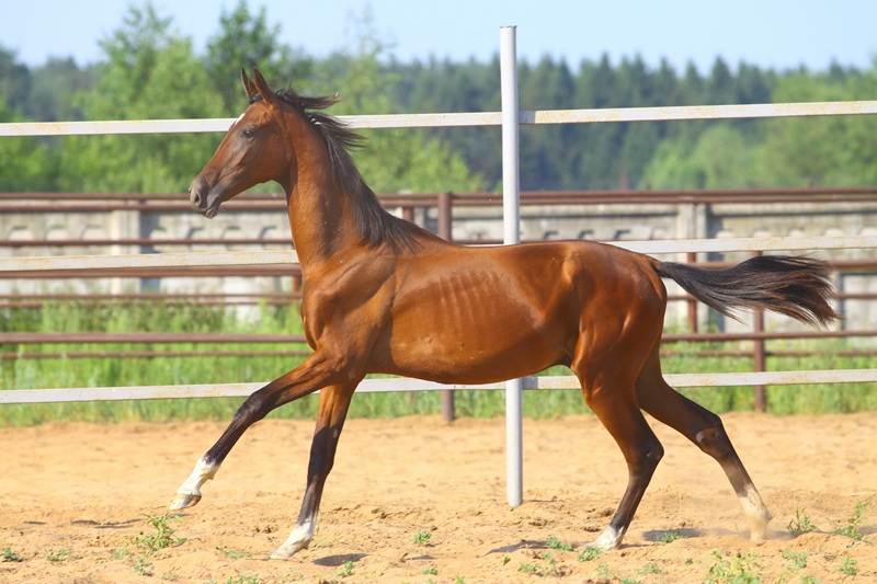 Какая она - донская лошадь