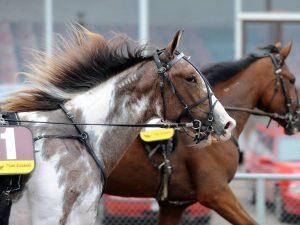 Особенности лошадей пегого цвета