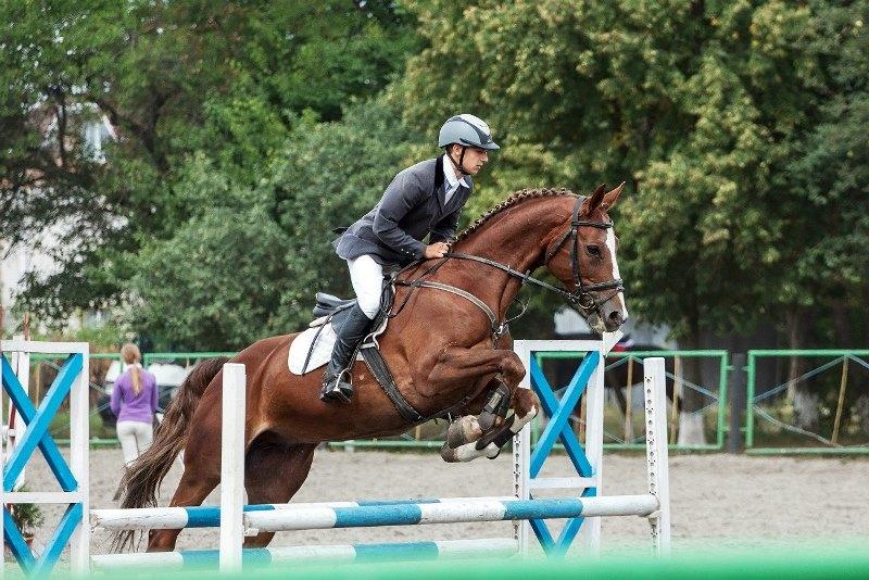 Элегантная ганноверская порода лошадей