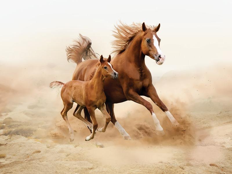 Сколько живут современные лошади