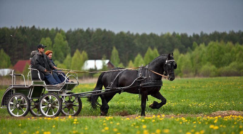 Сколько весит породистая лошадь