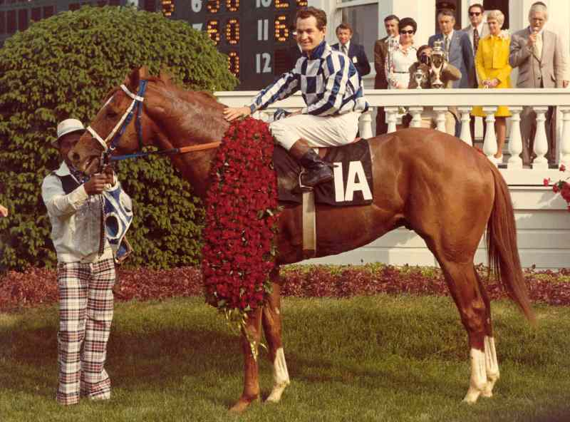 Какая самая дорогая лошадь в мире?