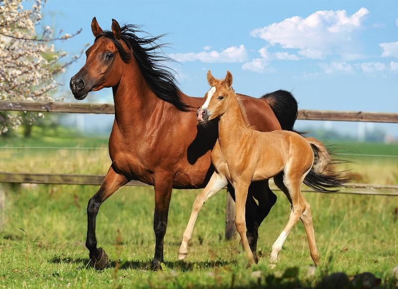 Иппология: наука о лошадях