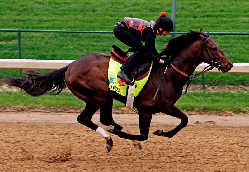 Виды и особенности бега лошади