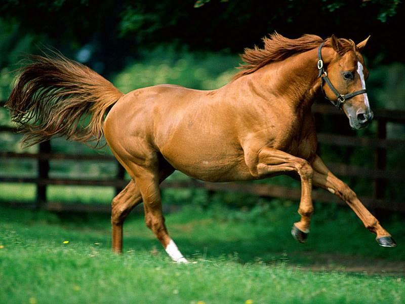 Как выбрать клички для лошадей?