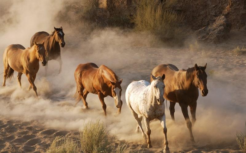 Дух свободы: дикие лошади