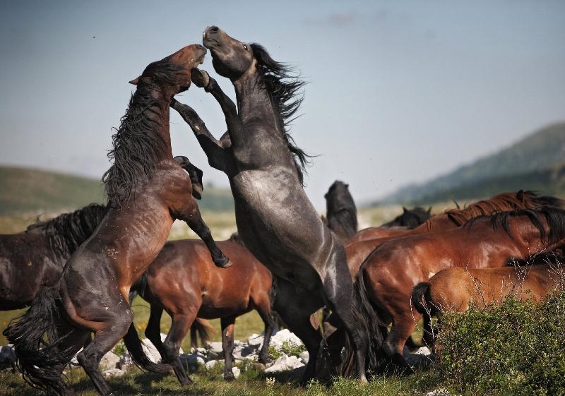 Картинки по запросу лошад тарпан