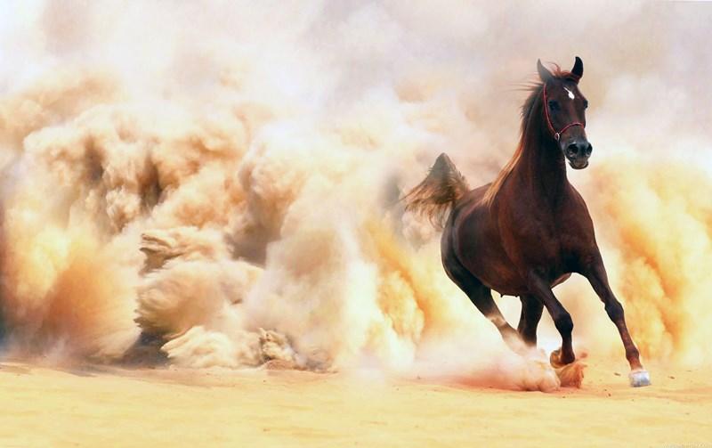От чего зависит скорость лошади