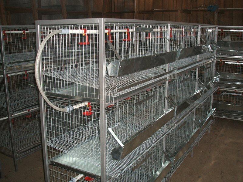 Клетки для содержания бройлеров в домашних условиях