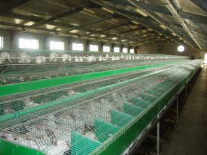 Виды промышленных клеток для кроликов