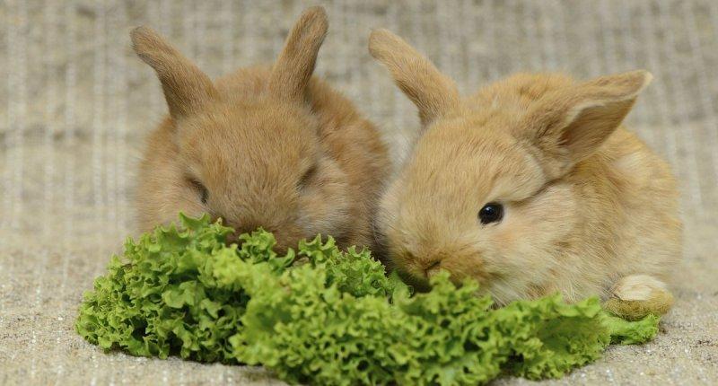 Разведение кроликов: чем можно кормить питомцев