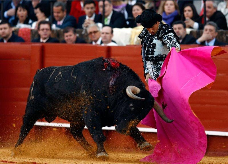 Кровавые бои быков: история корриды, описание и порядок битвы