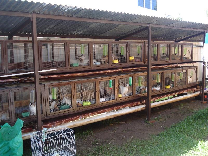 Разведение кроликов на ферме как бизнес: выгодно или нет