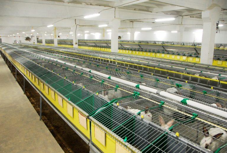 Бизнес выращивание кроликов 84